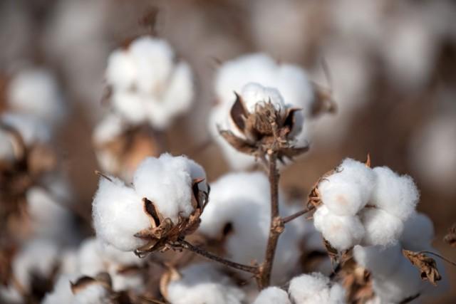 Что такое кумач: история и подробное описание хлопчатобумажной ткани