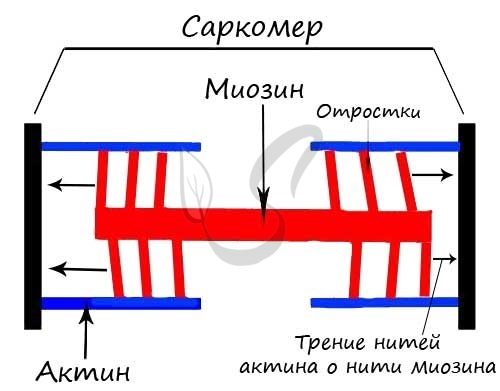 Ткань в полоску: поперечно полосатая скелетная материя, что можно сшить