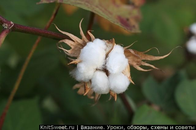 Пряжа хлопок (хлопчатобумажная): особенности нитки и ее применение